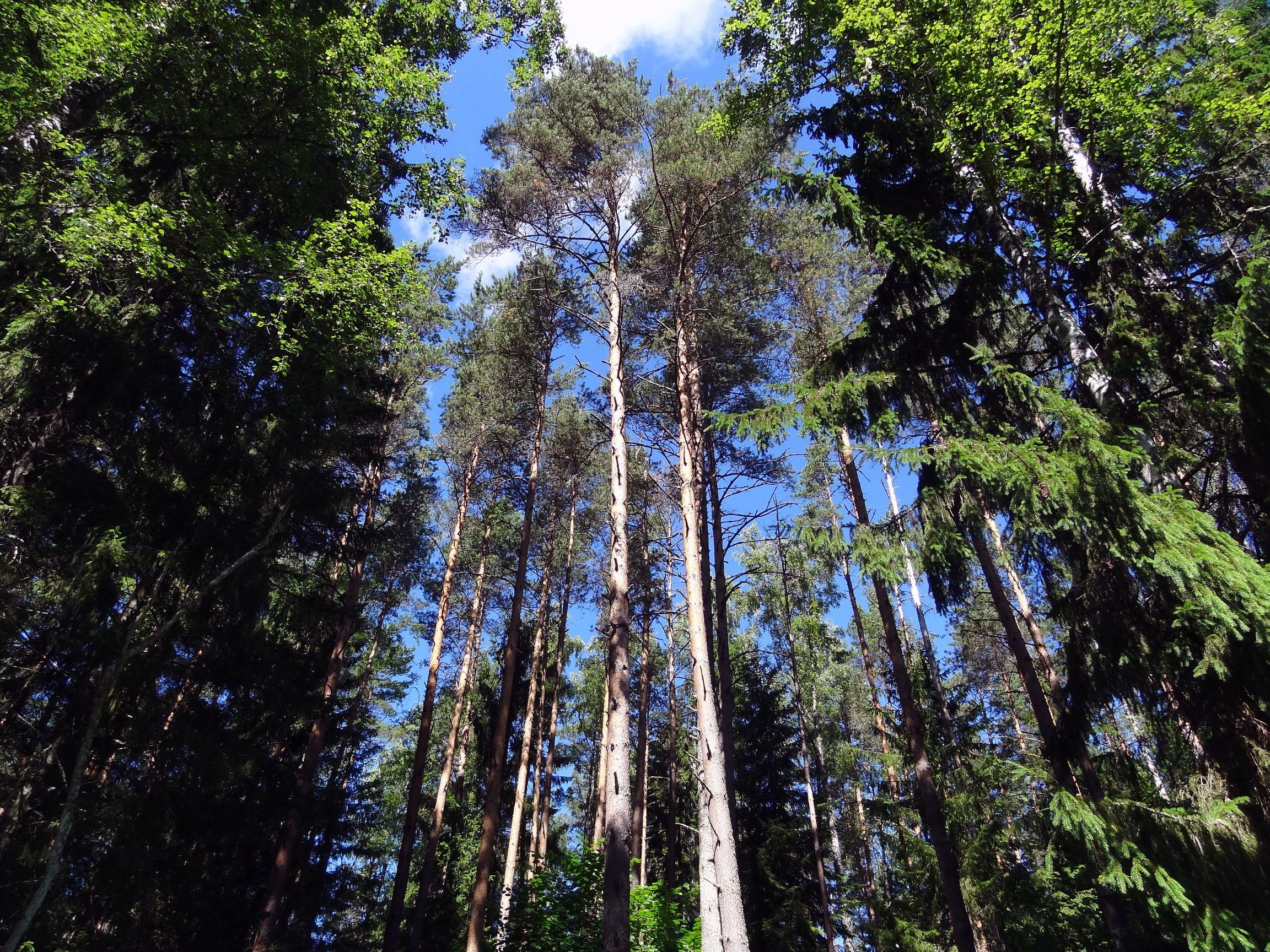 Ursprünglicher Wald