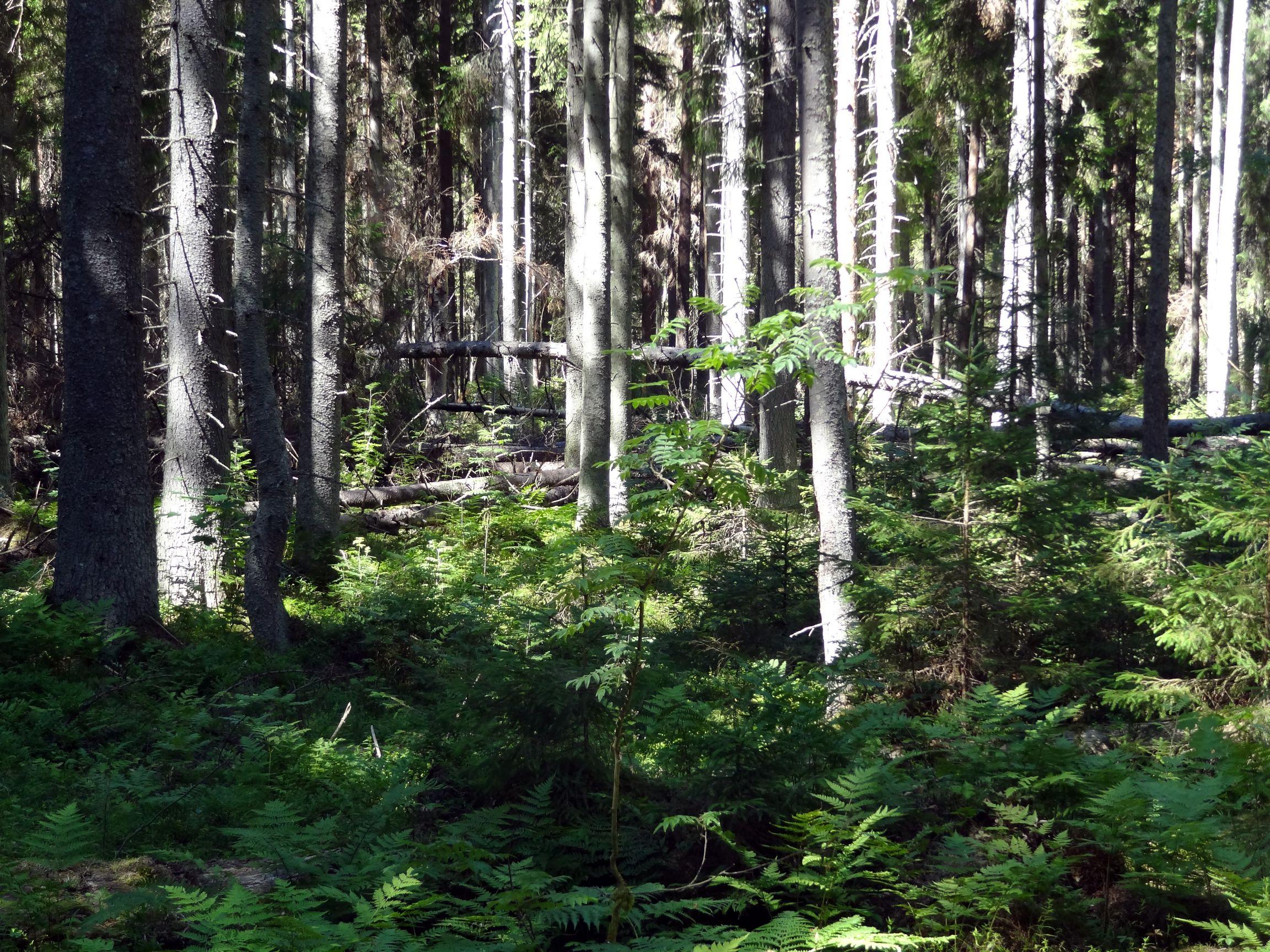 Urwald auf dem Nature-Trail