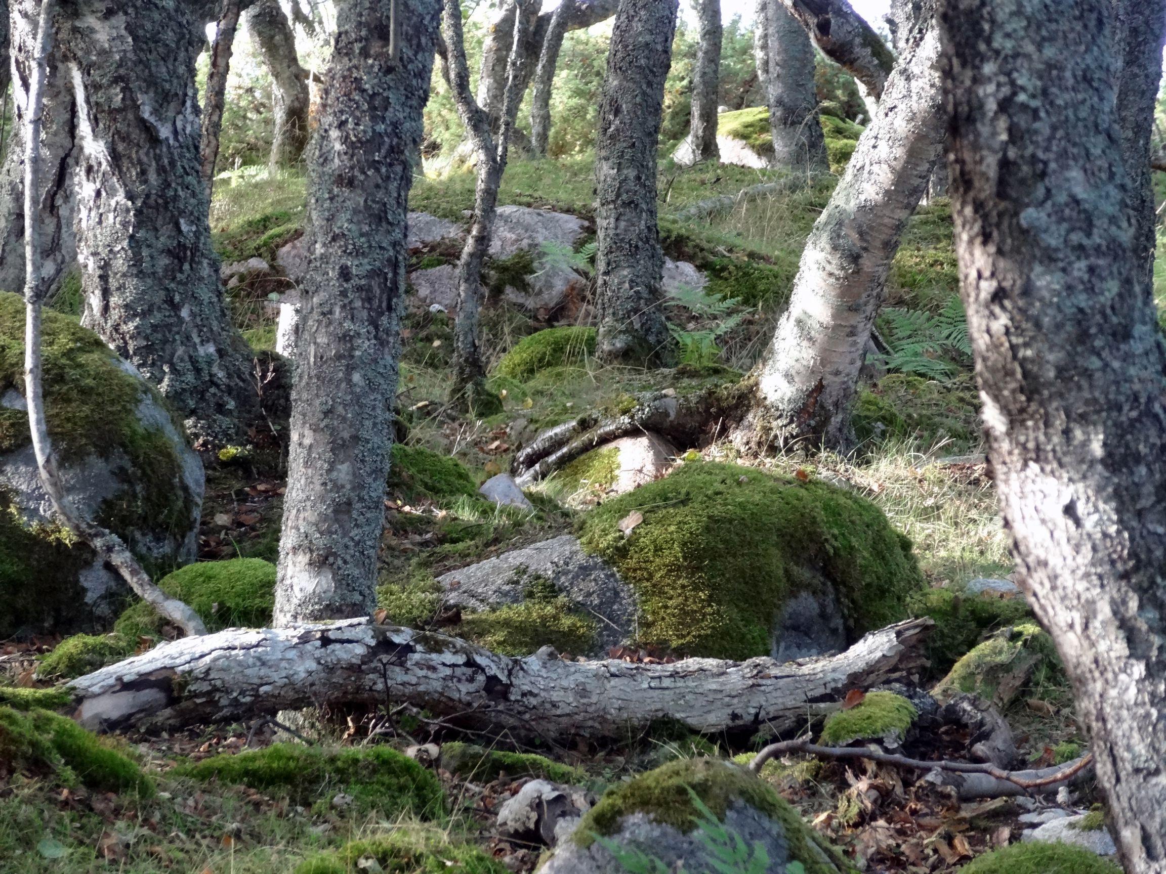 Waldweg mit versteckten Wegweisern