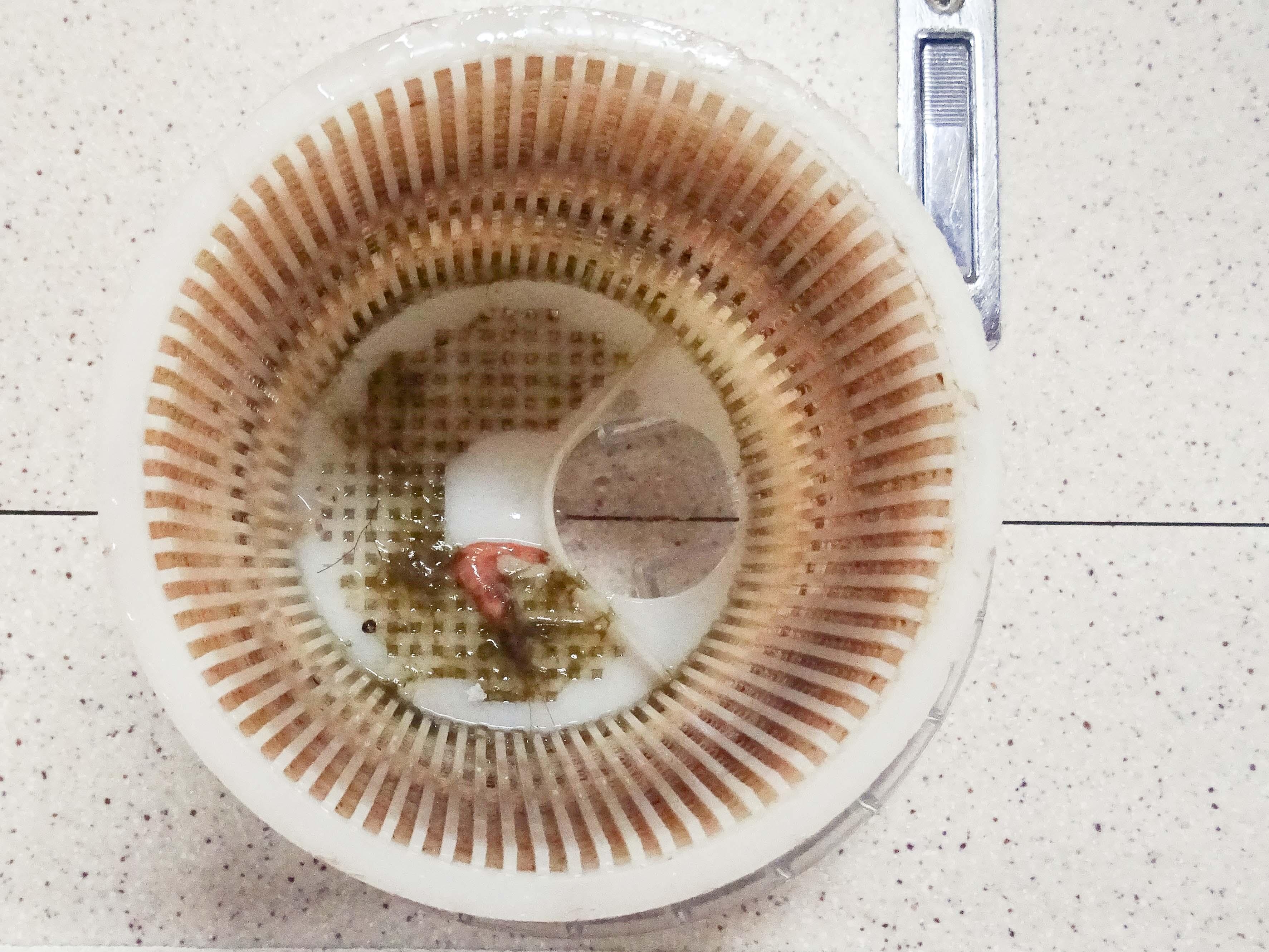 Krabbe im Seewasserfilter - regelmäßige Inspektionen sind wohl nötig