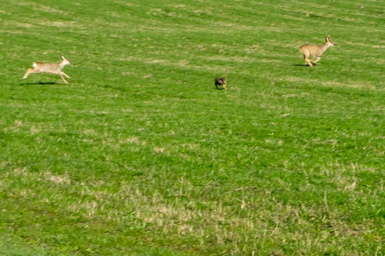 Rehe und Hase auf der Flucht vor uns