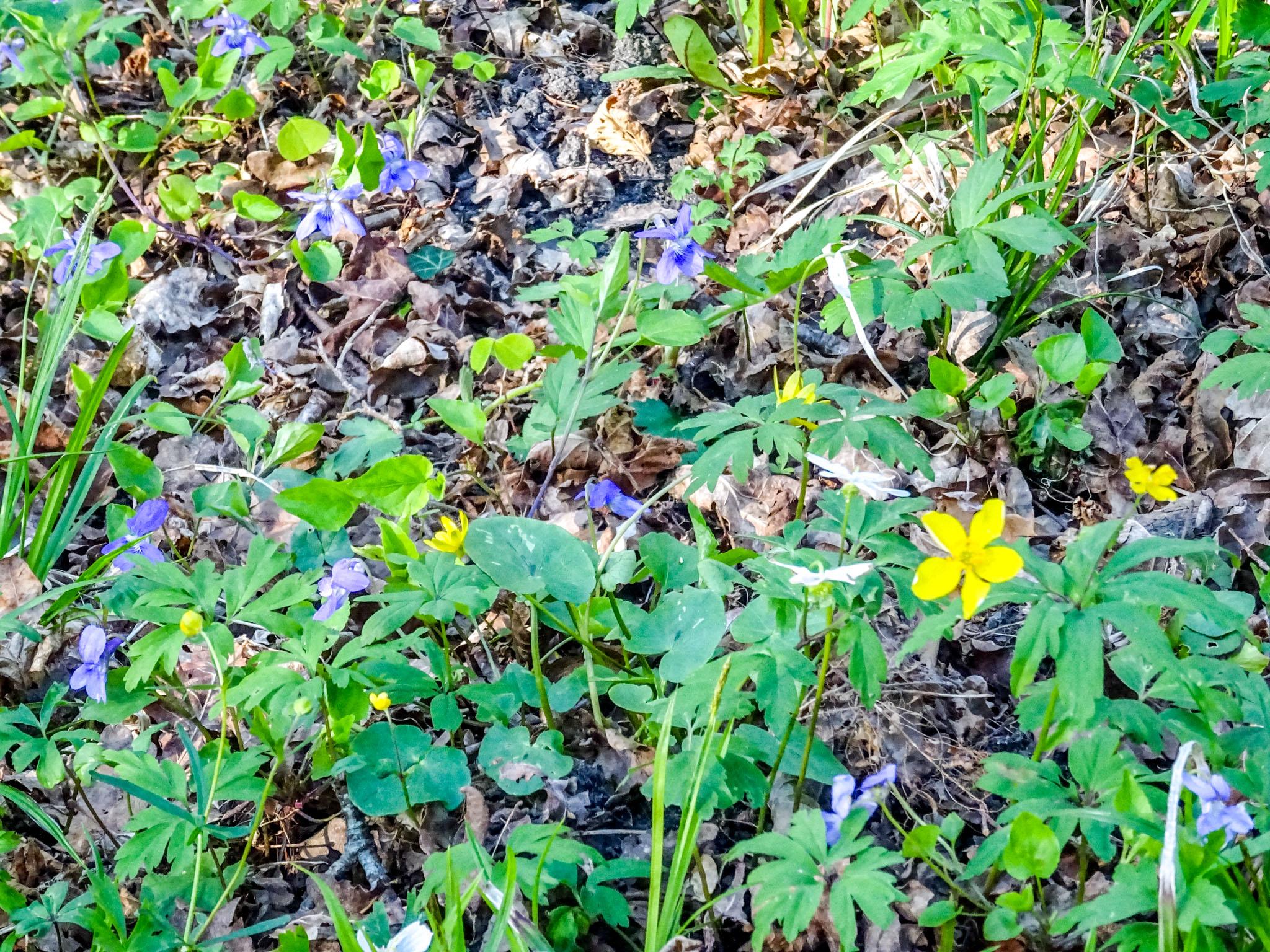 Blumenwiee