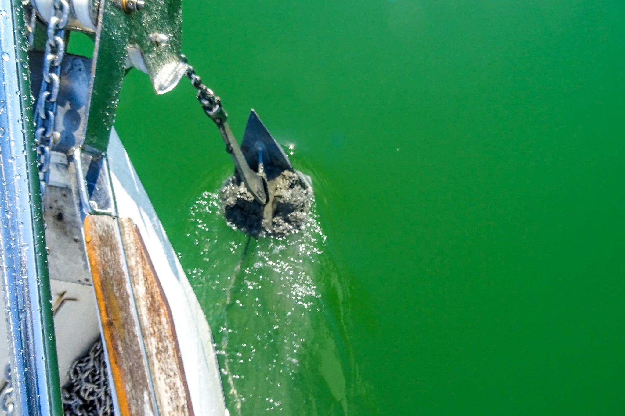 Ganz schön grünes Wasser