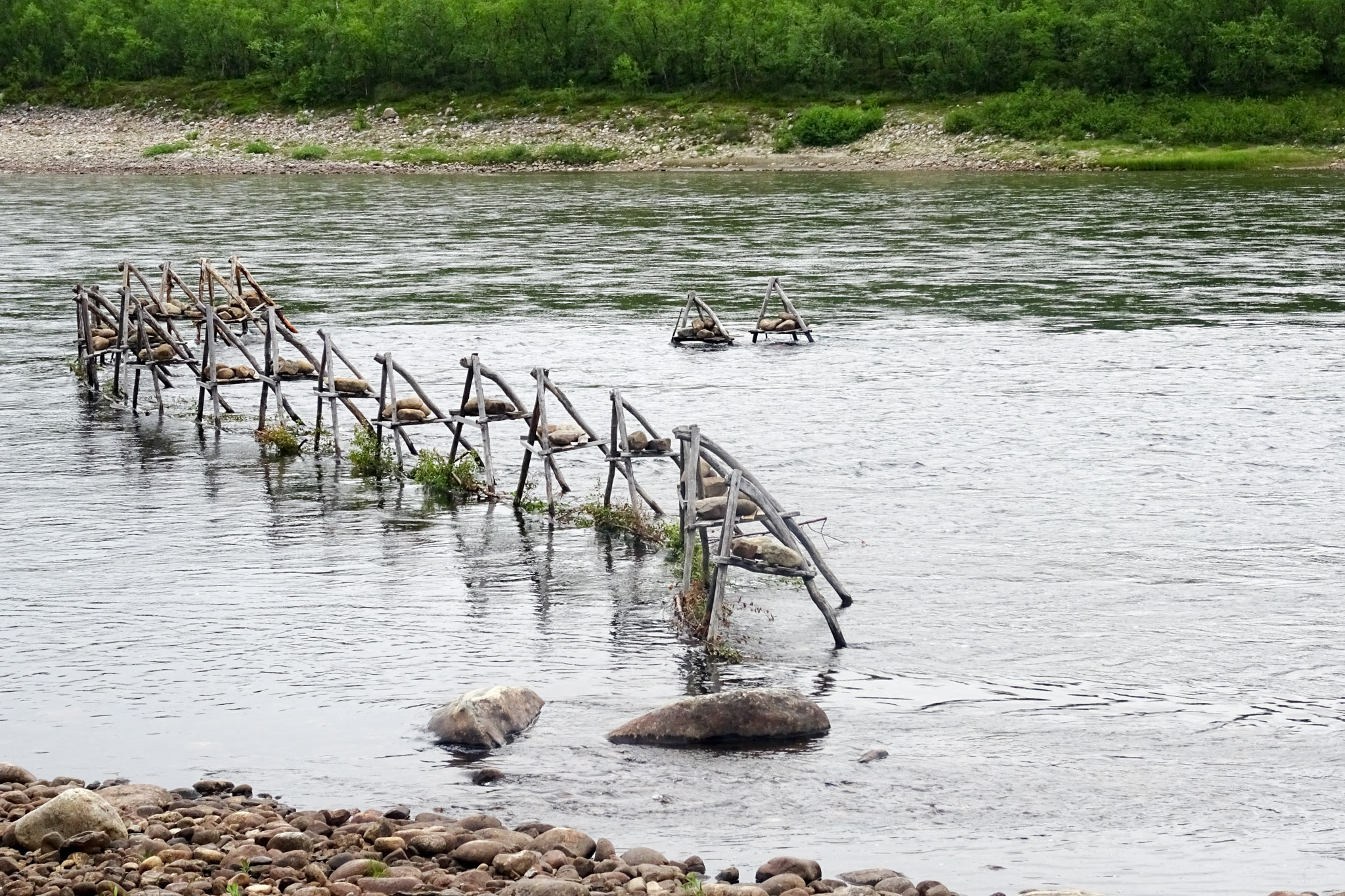 Fischreusen im Tenojoki