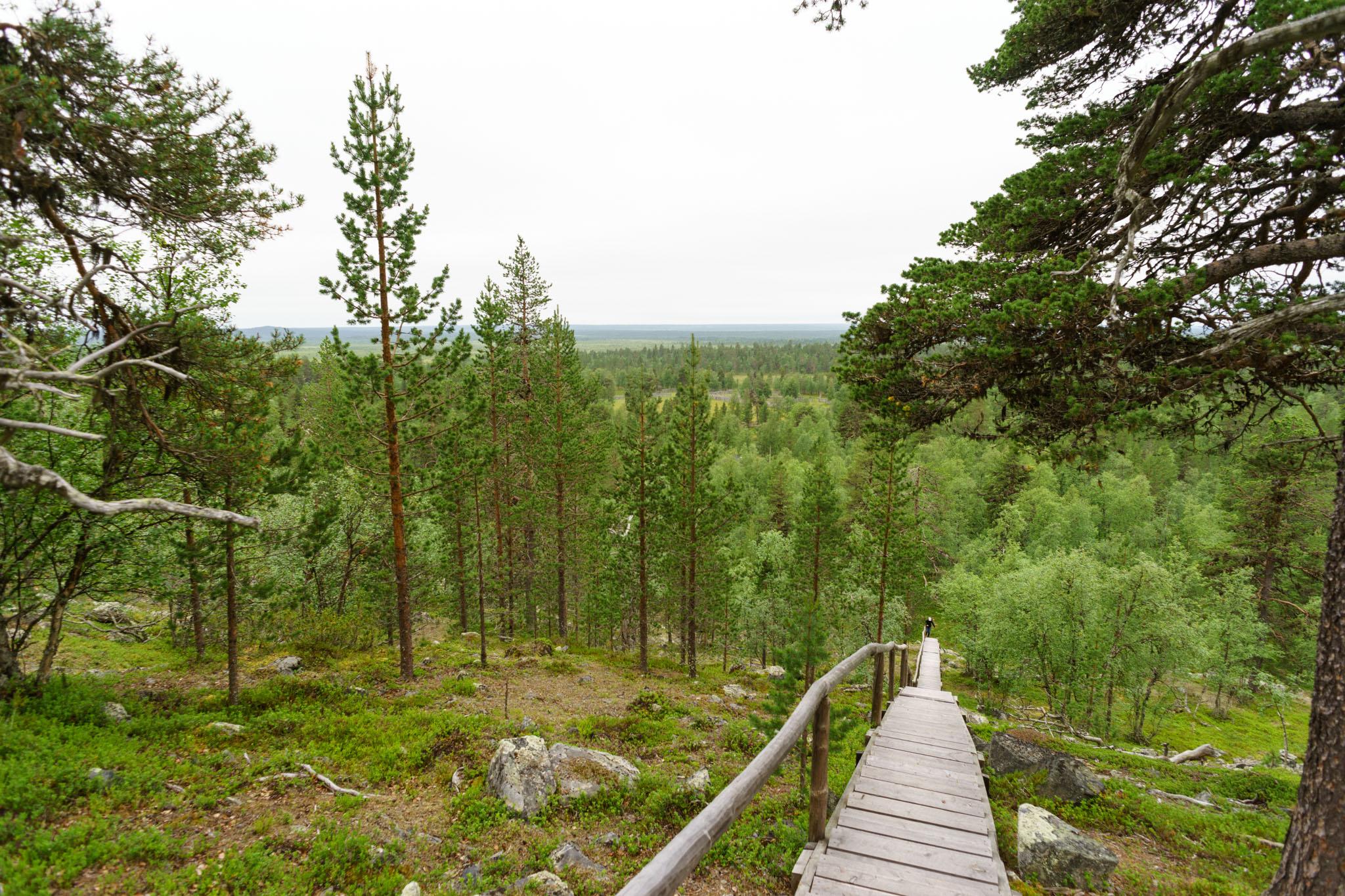 Blick abwärts auf die Wälder Finnlands