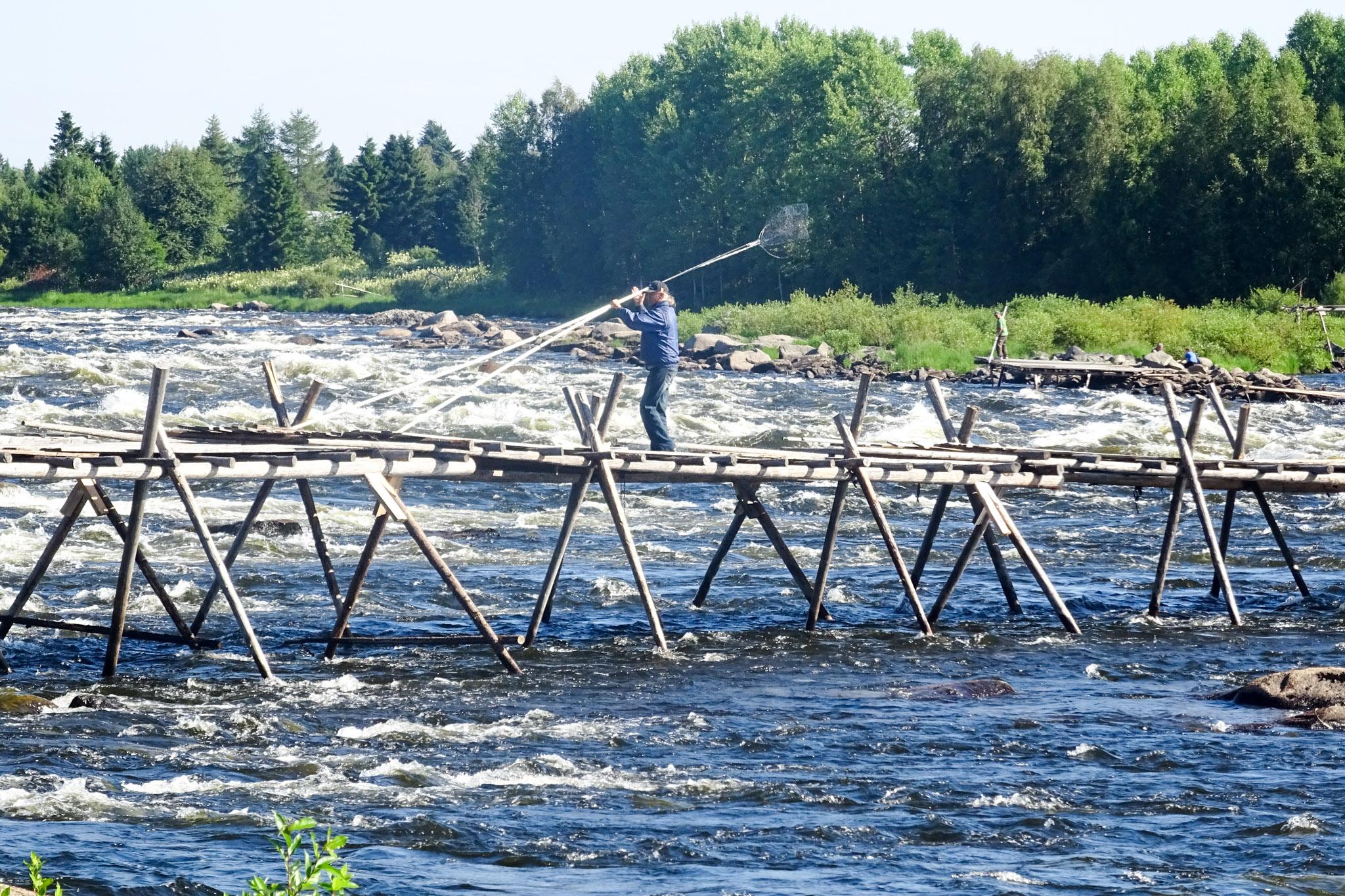 Angler mit Kescher