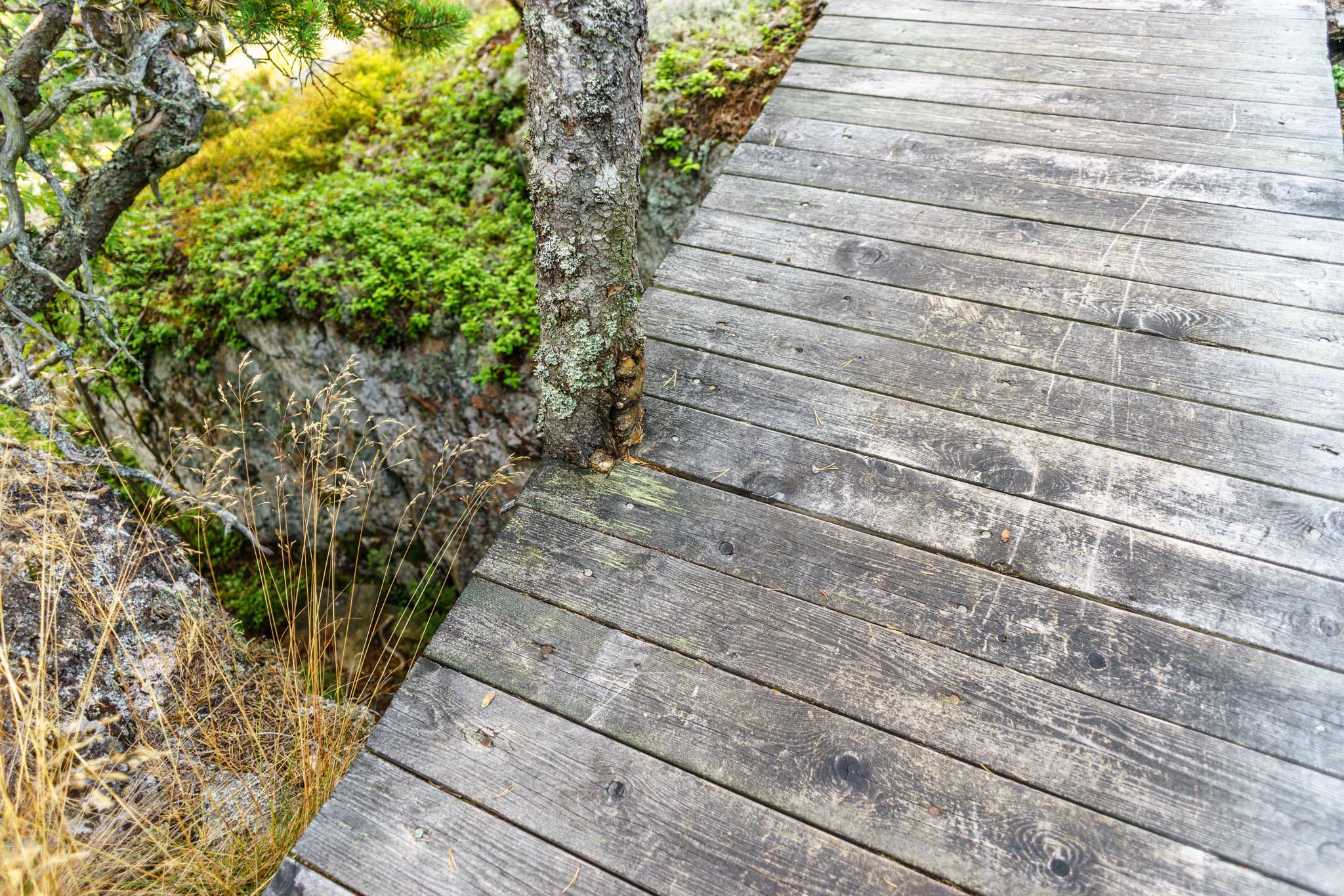 Brücken mit eingewachsenen Bäumen