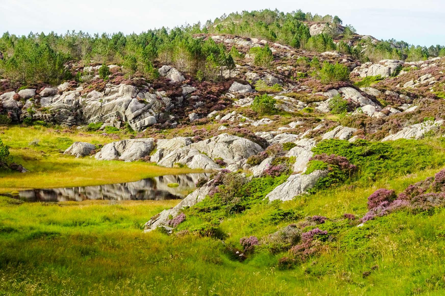 Überall Felsen und Heide