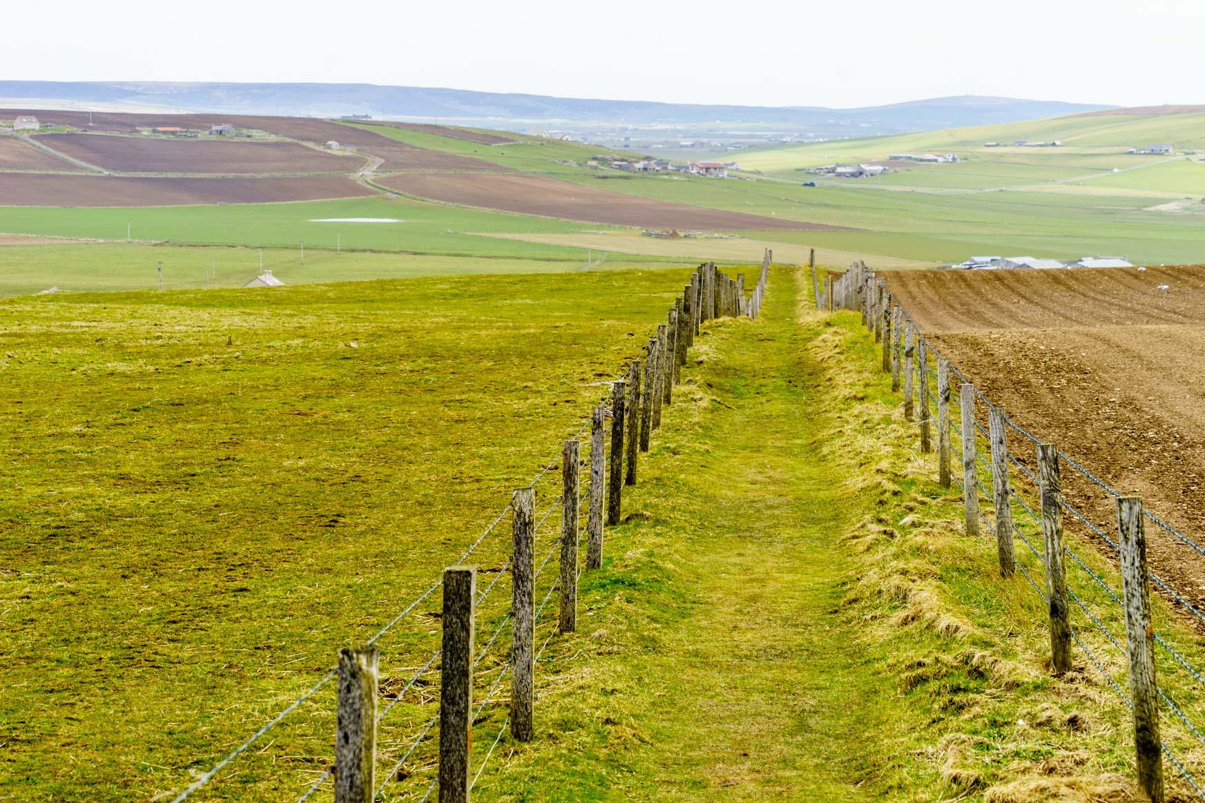 Rückweg durch die Felder