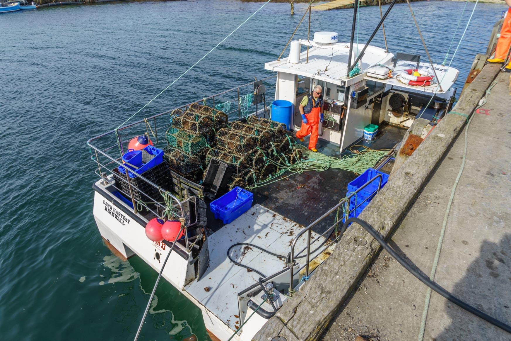 Fangreusen für Krebse und Lobster